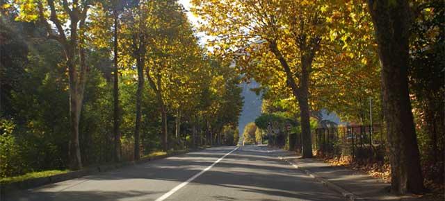 alberature stradale da salviamo il paesaggio
